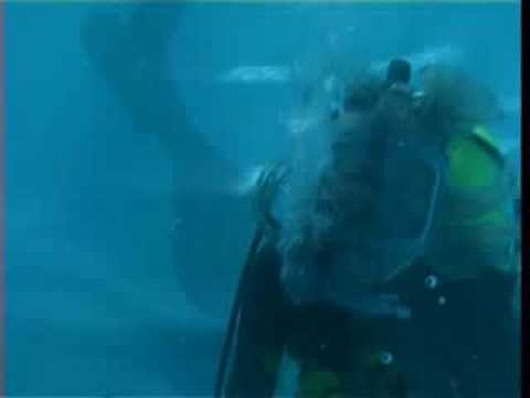 Susirubber scuba diving in an Interspiro full face mask Video