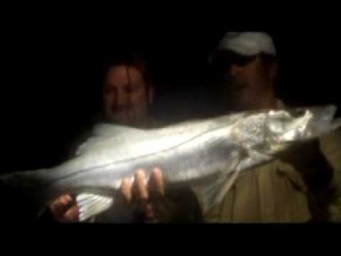 find Sarasota Fishing Charters | Book Bradenton Charter Boats | Watch Fishing Videos Florida