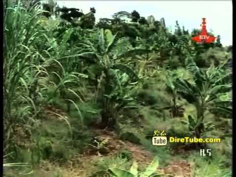 ETV 1PM Full Amharic News - Oct 19, 2011