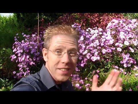 Garten-Bepflanzung Mit Ausdauernden Stauden; Video Von 3 Jahreszeiten