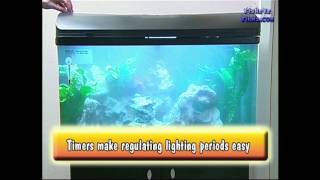 Lighting and Temperature for you CICHLIDS
