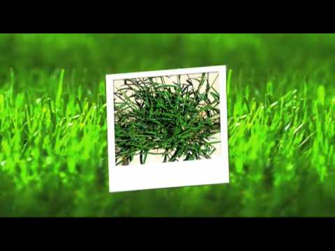 Cumming Lawn Care- Weed Pro: Crab Grass killer