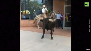Bull charges into Colorado Springs building before being lassoed