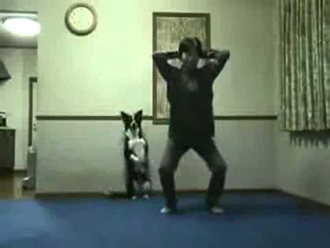 Собака жжет! » waboo.ru