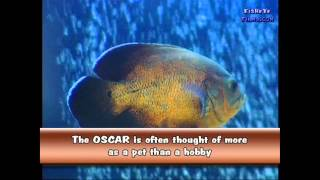 OSCARS a first look at these fantastic fish