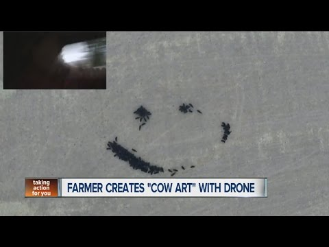 Kansas farmer creates 'cow art' with cattle and drone