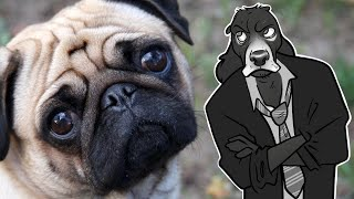 What's Wrong With PUGS (and Pedigree Dog Breeding)