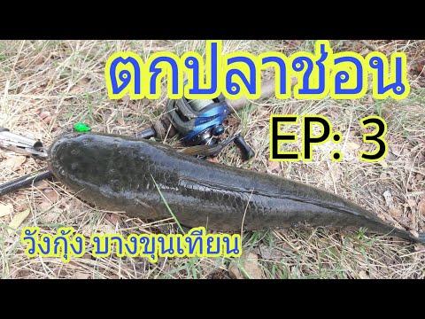 ตกปลาช่อน ด้วยเหยื่อปลอม วังกุ้ง บางขุนเทียน EP: 3