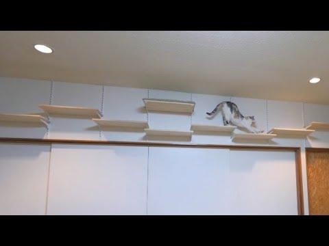 三毛猫空中散歩☆おねむの時間になり寝床へ移動 (10月05日 13:15 / 13 users)