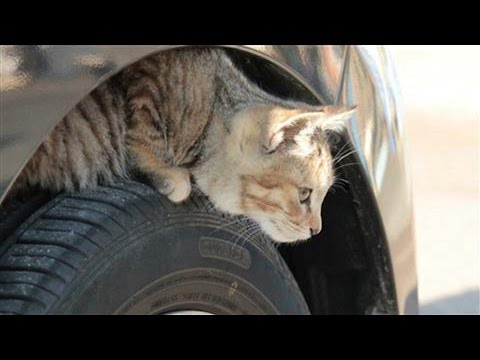 Nissan Launches Campaign to Save Cats in Japan