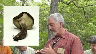 How We Identify Mushrooms Hd