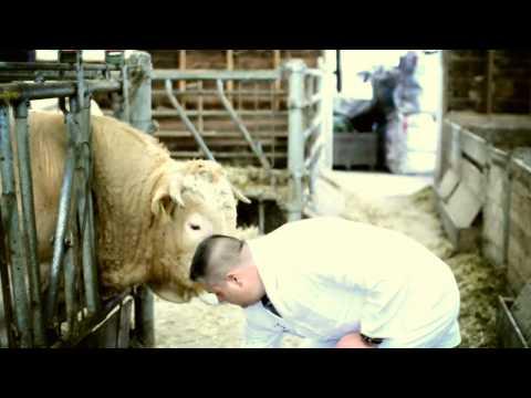Vers 24/7 - Blonde d'Aquitaine runderen