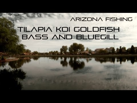 Arizona Fishing For Bass, Koi, Tilapia, Bluegill And Goldfish