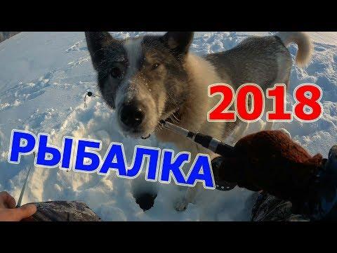 Рыбалка в белгородской области 2018 форум рыбаков