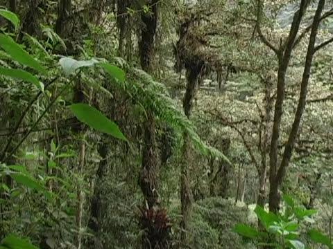 Bosque petrificado; Puyango - Mision Ecuador - RTU, Parte 2