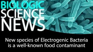 Science News - New species of Electrogenic Bacteria is a well known food contaminant