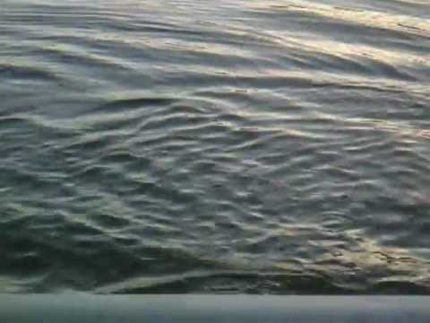 Lake-Allatoona-Fishing-Fin-Frenzy.wmv