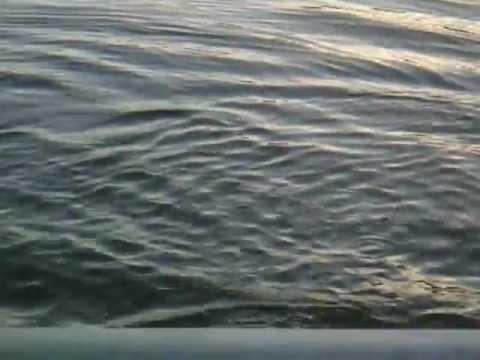 Lake-Allatoona-Fishing-Fin-Frenzy.wmv