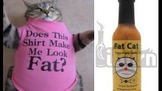 Purry Purry Sauce Review Fat Cat Hot Sauces