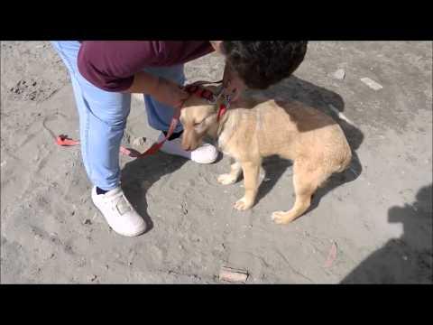 Animalinneed: Video of Reina