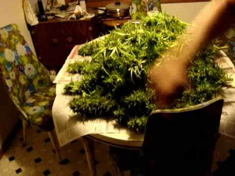 Marijuana Max, The Bog Niner and The Magic Black Bag Video