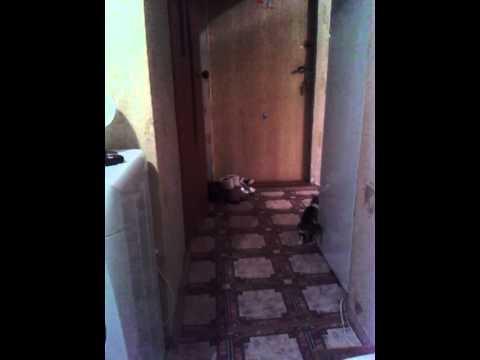 кошка играет с домовым