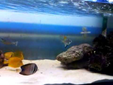 Marine aquarium in Bangladesh part 03