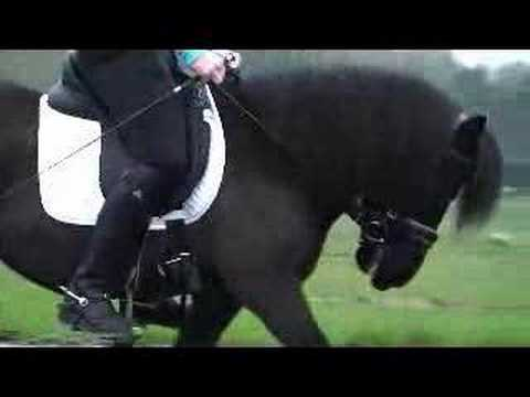 Dressuur Shetlander Tussen De Paarden Youtube