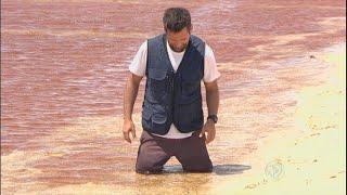 Repórter é 'engolido' por areia movediça em paraíso escondido