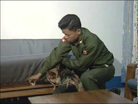 Burmese Military Intelligence - Bomb Sniffing Dog Training