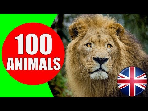 Animals for Kids to Learn - 100 Animals for Kids, Toddlers and Babies in English   Educational Video