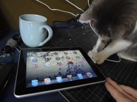 iggy investigates an ipad Video