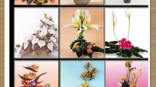 Guia Para Hacer Arreglos Frutales, Florales, Centros De Mesa, Explicados Paso A Paso