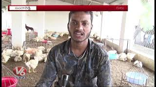 Huge Loss To Poultry Farms Due To High Temperature | Sangareddy