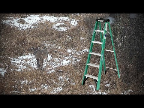 Deer Hunting Strategy - Step Ladder