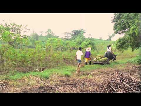 A Glimpse of Her Stories: Rural Women's Resilience and Food Security