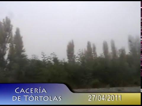 Caza de Tórtolas Linares 2011, los liguetes