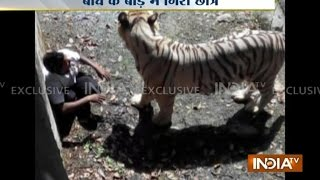 Youth Mauled To Death By White Tiger at Delhi Zoo - India TV