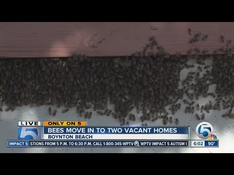 Bees move into vacant homes