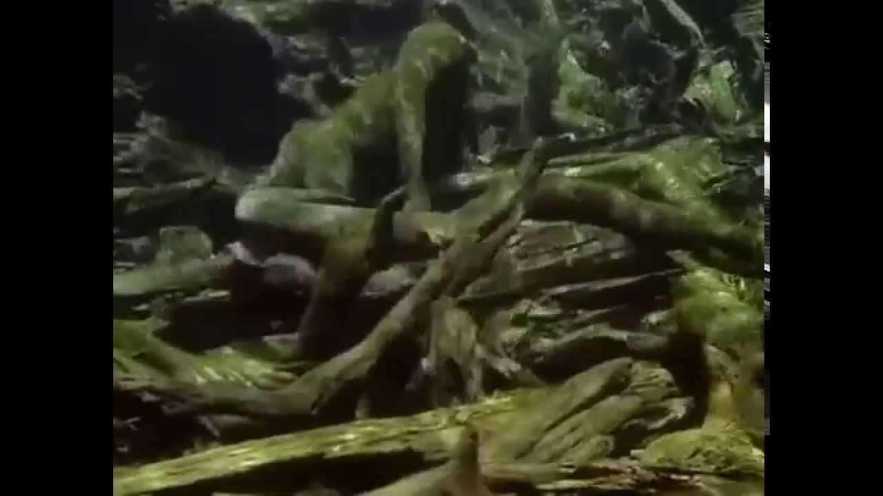 Electric Eel Attack Human