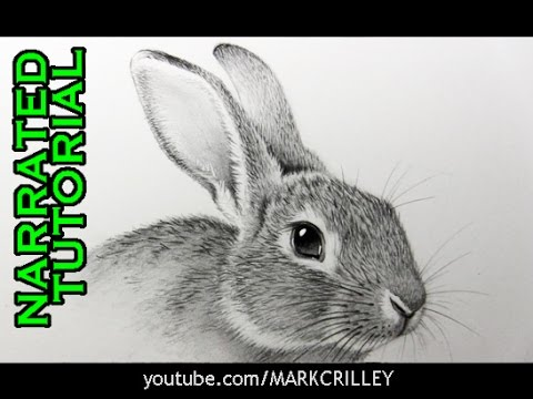 How to Draw a Rabbit: Narrated, Step-by-Step