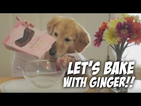 Cooking With Ginger — golden retriever bakes a cake
