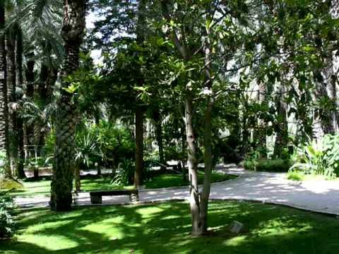 Huerto del Cura palms 2009