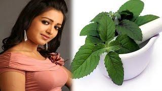 যৌবনও ধরে রাখে তুলসী পাতা, জেনে নিন এই পাতা কিভাবে ব্যবহার করবেন ! Benefits of Tulsi leaf