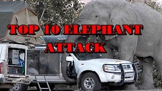 Top 10 Elephant Attack Videos - So Dangerous!!!!