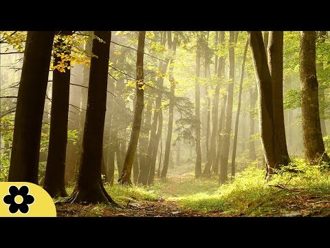 Healing Music, Meditation Music Relax Mind Body, Relaxing Music, Slow Music, �C