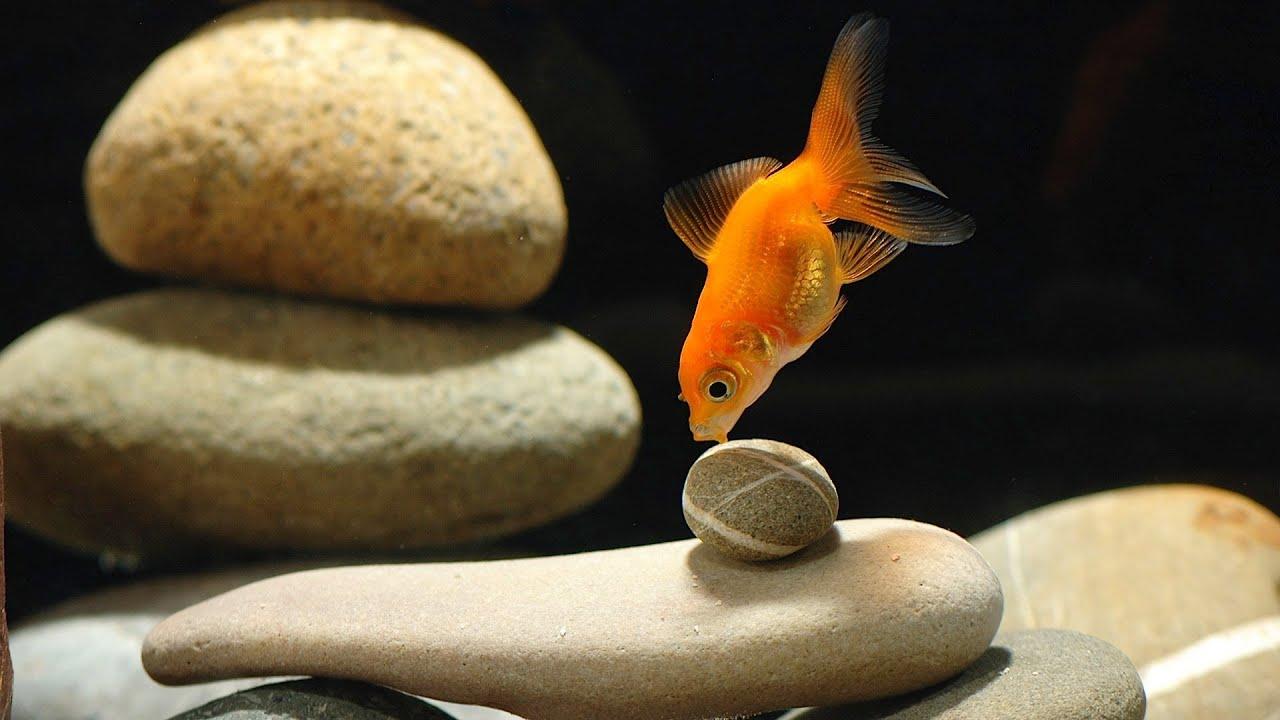 How to Set Up a Goldfish Tank | Aquarium Care - YouTube