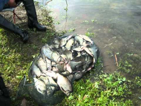 сезон рыбалки на енисее