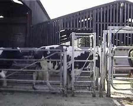 Pegasus Sorting Gate Systems Video