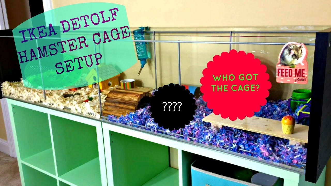 Ikea detolf hamster cage setup who got the cage youtube for How to build a hamster cage